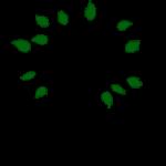 Terre d'olivier - jardinier écologique