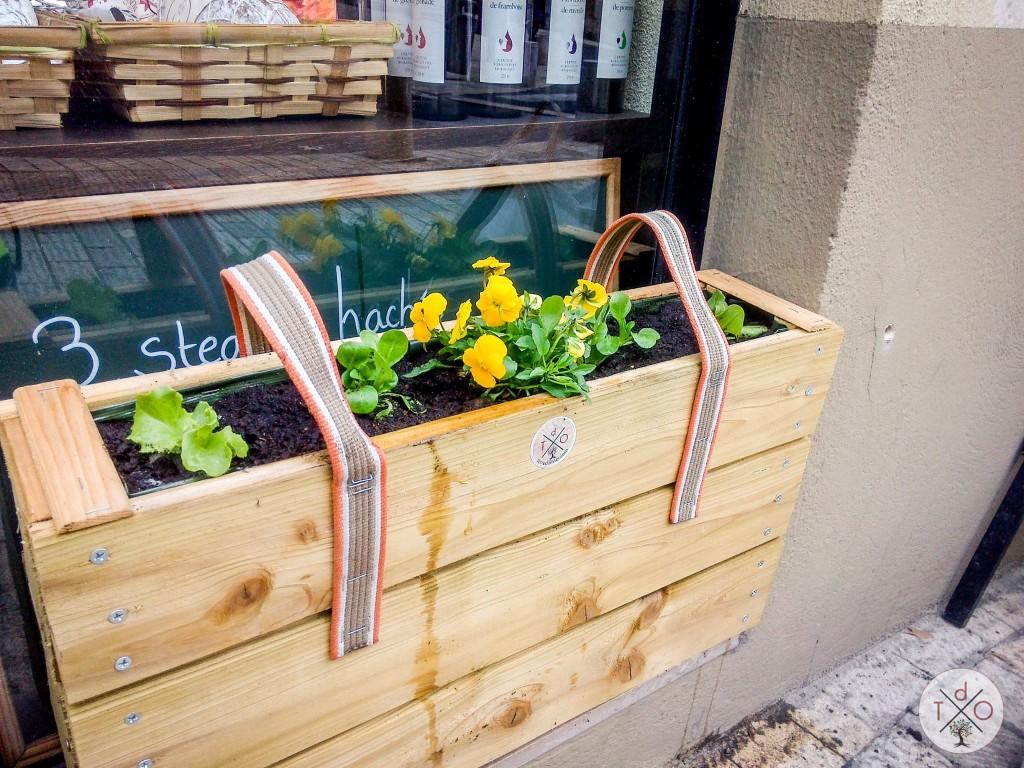Micro-jardin sur une rebord de vitrine : salades et pensées comestibles!